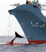 whaling2.jpg