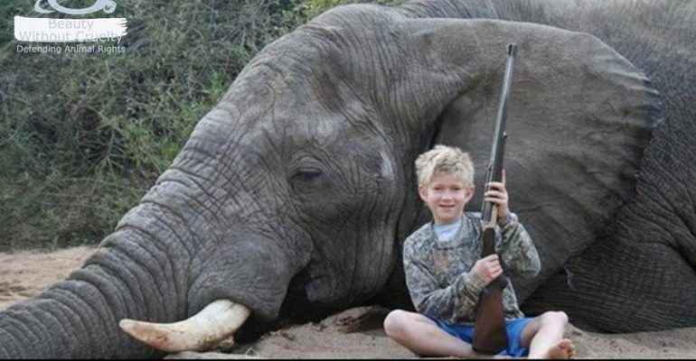 Trophy Hunting Archives