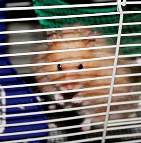 Hamster Cruelty